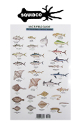 MAC'S FIELD GUIDE TO CALIFORNIA COASTAL FISH